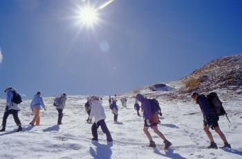 Kauri Pass Trekking